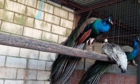 Tienda de Animales y Piensos En Cáceres ANIMALIA (GALLINAS DE ALTA PRODUCCIÓN Y CEREALES)