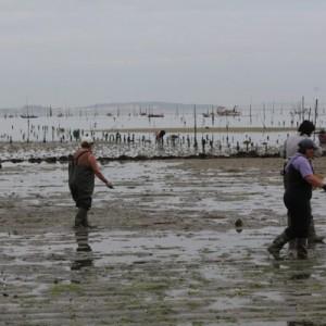 Distribuidor De Pescados Y Mariscos En Extremadura - Pescanoex