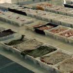 Distribuidor de Pescado y Marisco Pescanoex