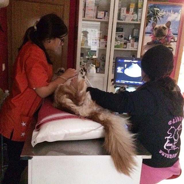 Centro veterinario Jaraiz de la Vera Fátima Paredes