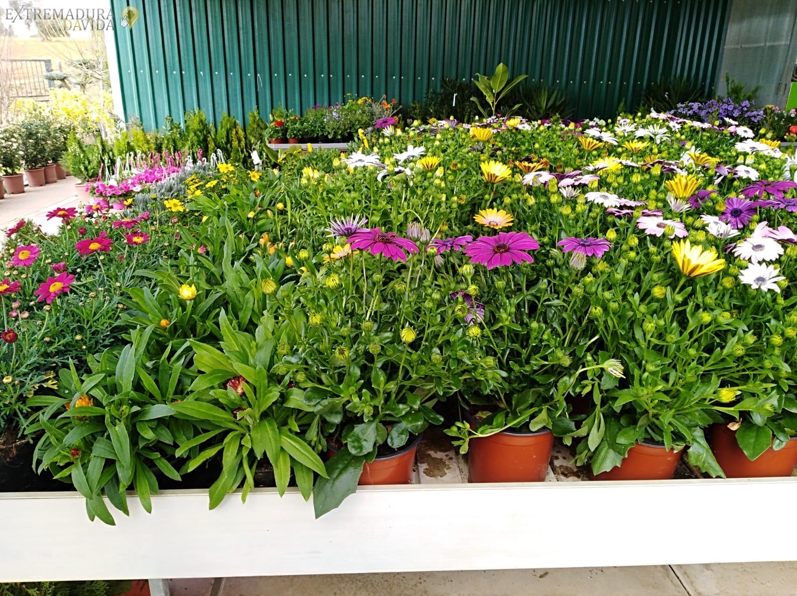Vivero en Almendralejo Centro de jardinería Tiza