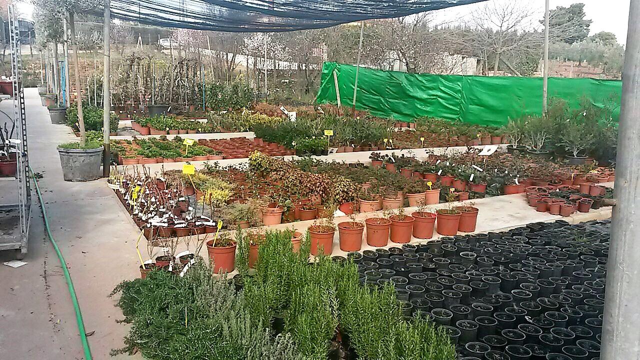Vivero en almendralejo vivero de tiza extremaduradavida for Vivero casa jardin