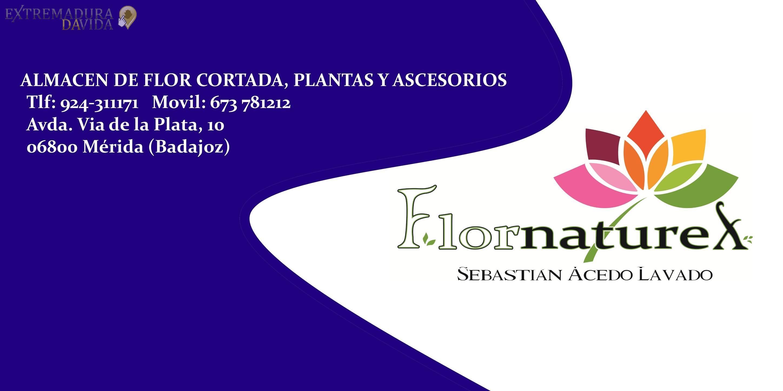 Floristería Flornaturex en Mérida