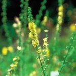 hebolario herbodietetica en Zafra Pronatura