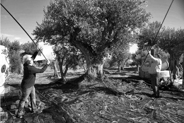 Almazara Extremadura Hermanas Rueda Valdefuentes