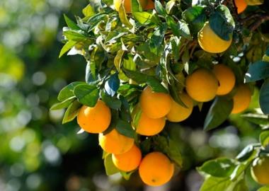 Vivero caceres pinsapo malpartida de caceres for Viveros frutales