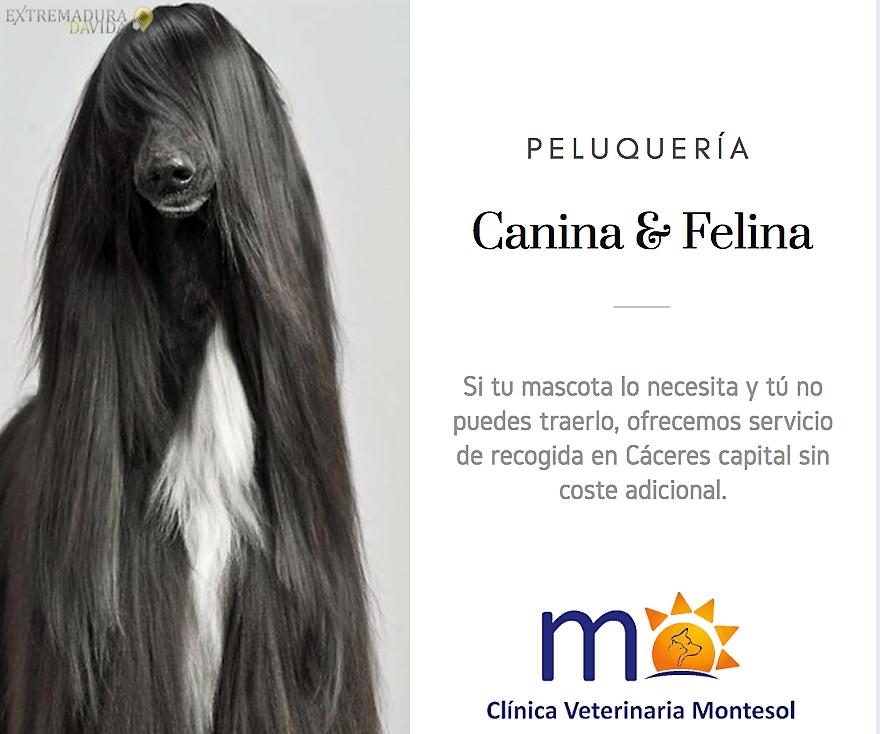 Peluqueria canina felina Cáceres Montesol Mejostilla