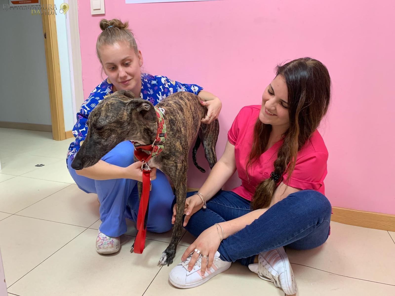Clínica Veterinaria en la Vera Fatima Paredes Jaraiz de la Vera