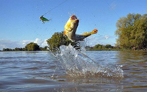 Maquinaría Agrícola y Artículos de Pesca Sport Fishing Corner