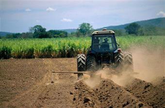 SERVICIOS AGRICOLAS EN EL CASAR DE CACERES OLLERO