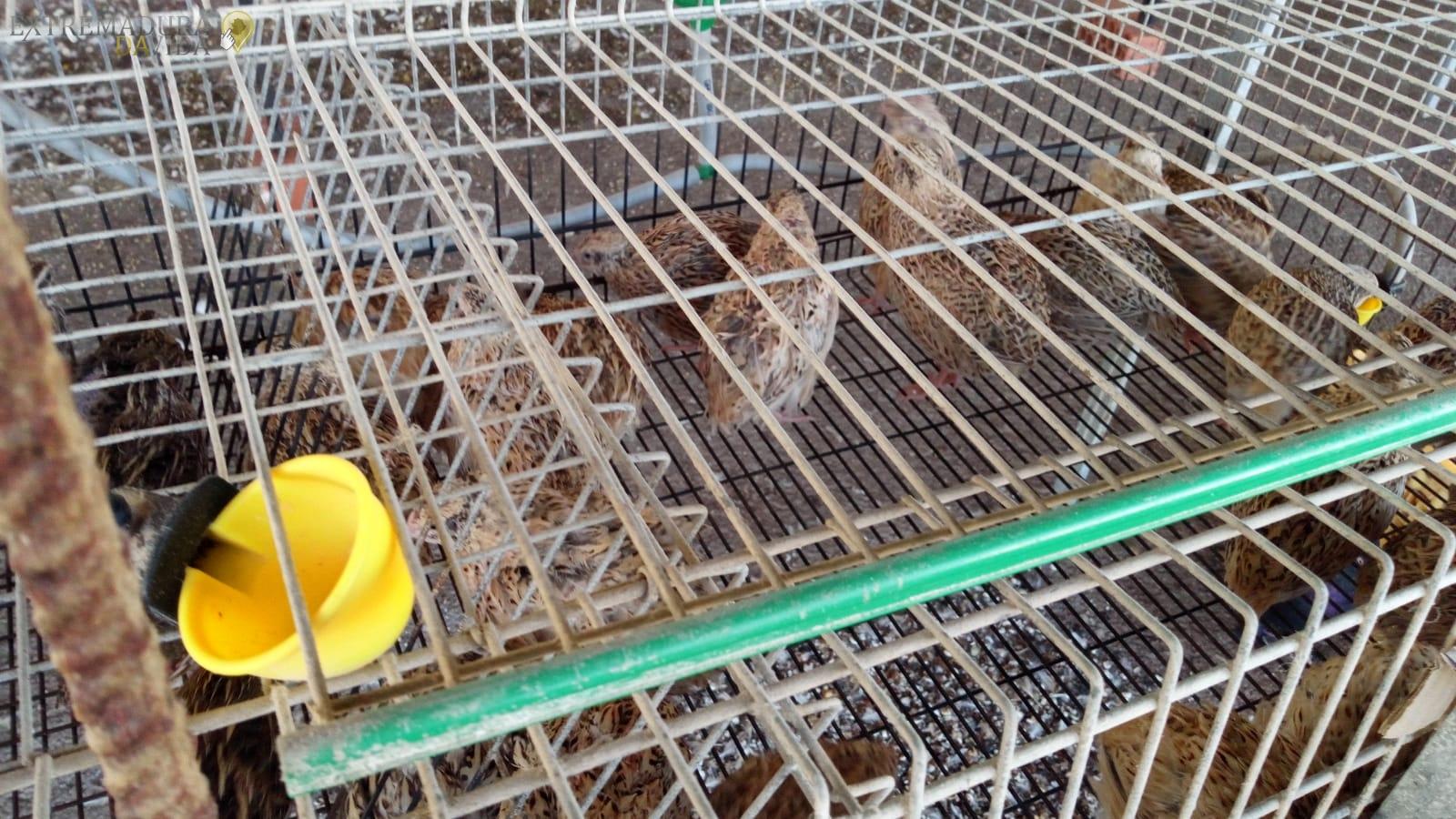 La mejor tienda de animales Gallinas en Cáceres Animalia