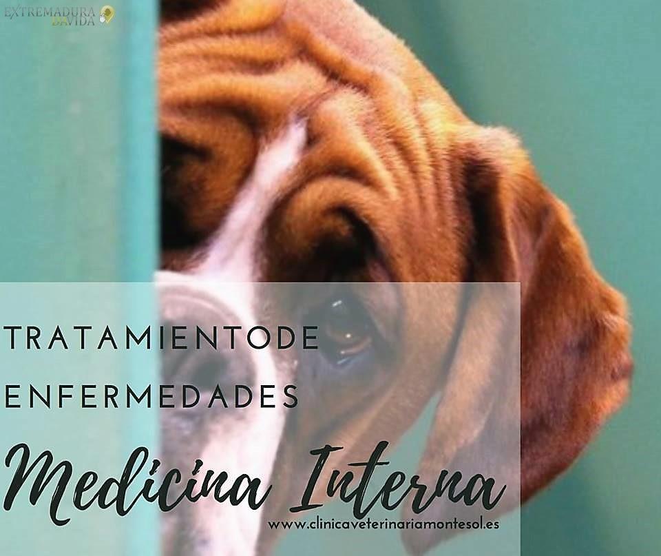 Clínica veterinaria 24 horas Cáceres Montesol