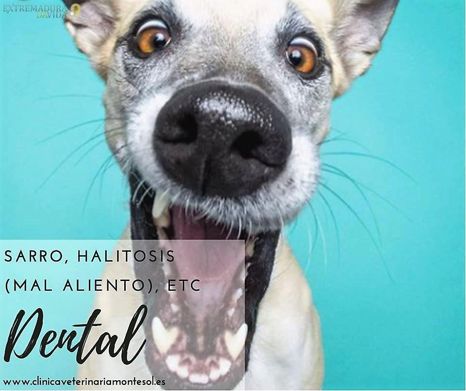 Halitoxis Clínica veterinaria 24 horas Cáceres Montesol